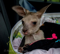 17_12_02_143848_Moura wildlife rescue_0023