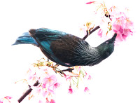 Tui in High Key, Best Digital Image Mar ,15